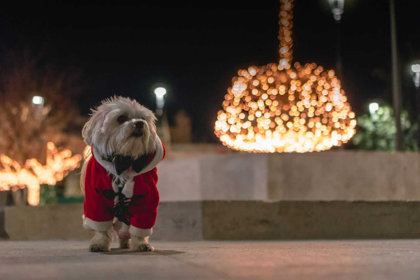 Santa Paws Is Coming To Town That Dog Momma